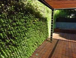 vertical-garden-3jpg.jpg